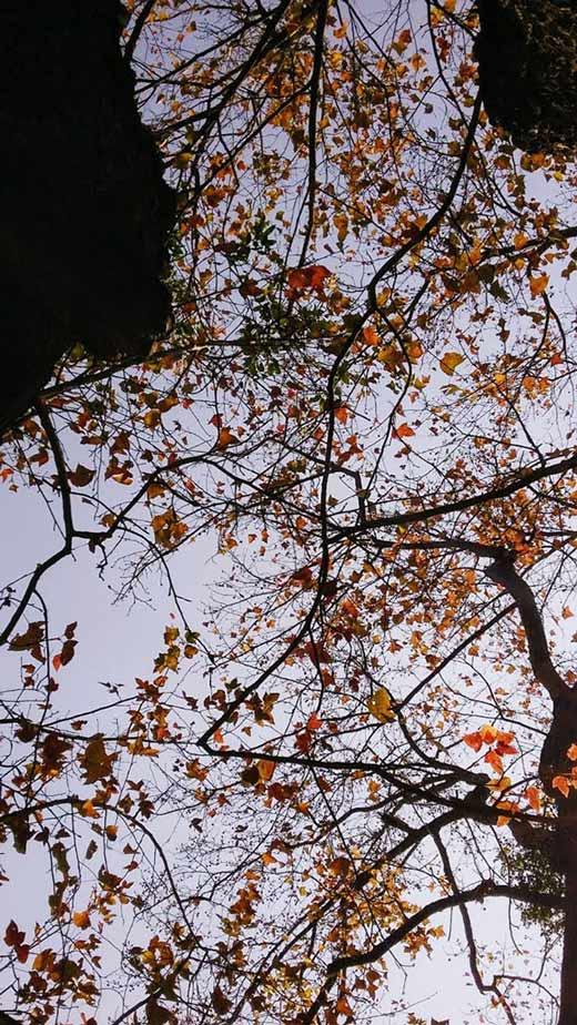 Trốn giá lạnh về Hải Dương ngắm rừng phong lá đỏ ấm rực cả bầu trời - 2