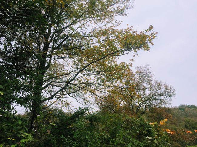 Trốn giá lạnh về Hải Dương ngắm rừng phong lá đỏ ấm rực cả bầu trời - 3