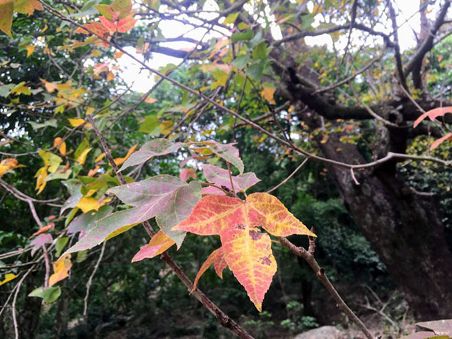Trốn giá lạnh về Hải Dương ngắm rừng phong lá đỏ ấm rực cả bầu trời - 4