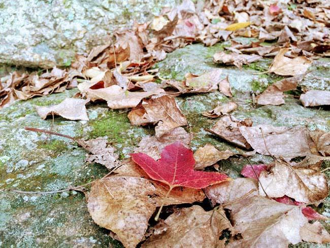 Trốn giá lạnh về Hải Dương ngắm rừng phong lá đỏ ấm rực cả bầu trời - 8