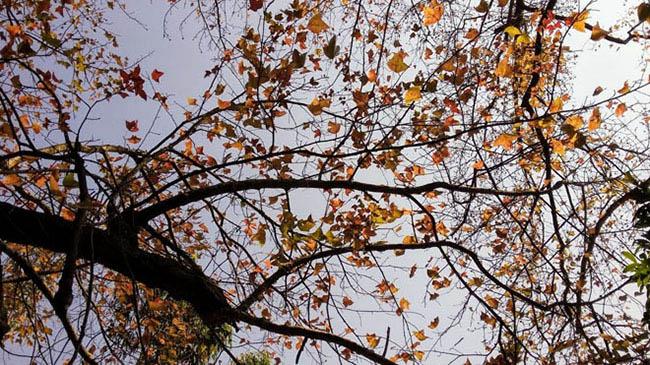 Trốn giá lạnh về Hải Dương ngắm rừng phong lá đỏ ấm rực cả bầu trời - 12