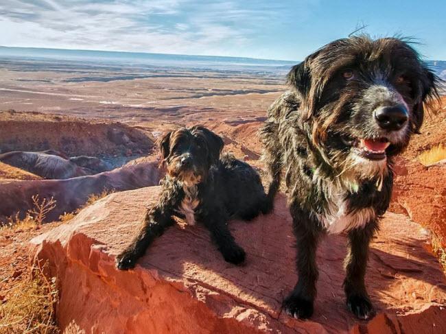 Chàng trai nghỉ việc để đưa cún cưng du ngoạn khắp nước Mỹ - 2