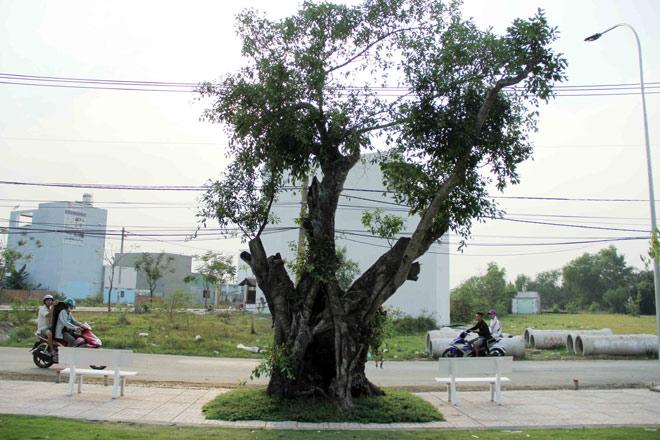 """Cụ cây báu vật ở Sài Gòn bỗng """"bật gốc bay đi"""" giờ ra sao? - 14"""