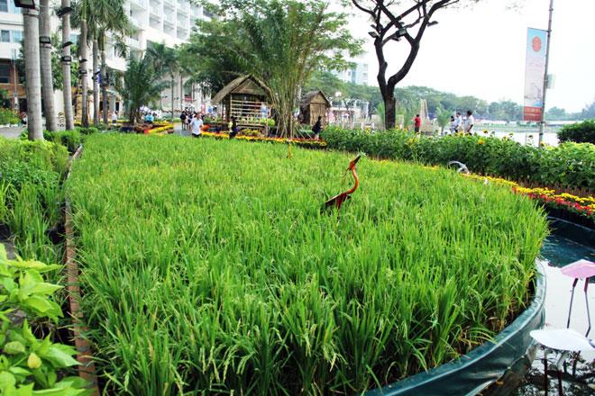 """Hồn quê xuất hiện tại """"khu nhà giàu"""" ở Sài Gòn ngày giáp Tết - 6"""