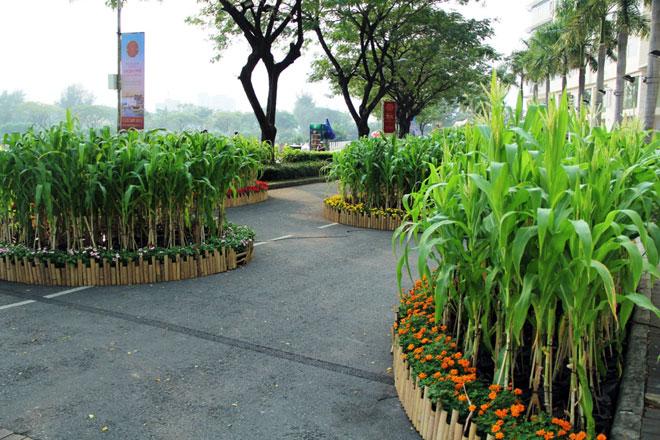 """Hồn quê xuất hiện tại """"khu nhà giàu"""" ở Sài Gòn ngày giáp Tết - 9"""