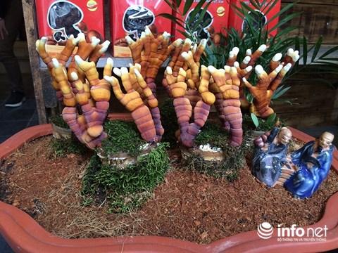 Hàng độc chơi Tết: Nấm linh chi bonsai sừng hươu đỏ - 3