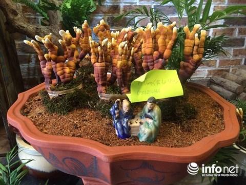 Hàng độc chơi Tết: Nấm linh chi bonsai sừng hươu đỏ - 7