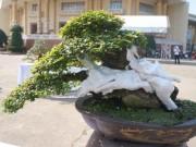 """Thị trường - Tiêu dùng - La liệt bonsai độc lạ giá cả cây vàng """"đại náo"""" thị trường Tết 2018"""