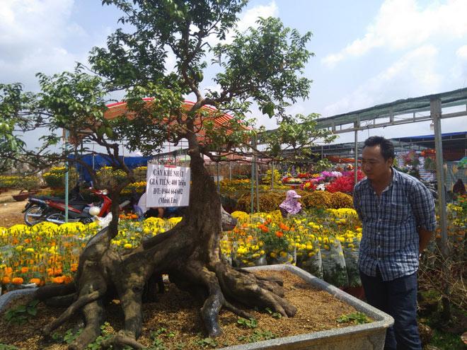 Chiêm ngưỡng cây khế hình chó, dừa 15 ngọn giá nửa tỉ ở Phú Quốc - 4