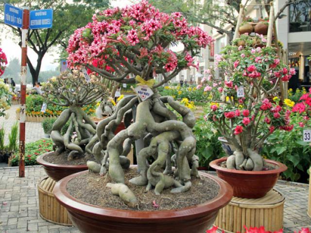 """Ngắm những """"cụ"""" sứ """"hái vàng, hái bạc"""" trong dịp Tết ở Sài Gòn"""