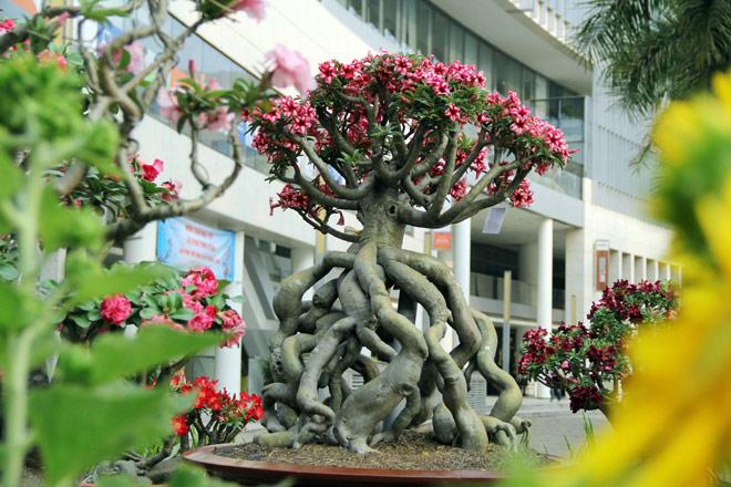 """Ngắm những """"cụ"""" sứ """"hái vàng, hái bạc"""" trong dịp Tết ở Sài Gòn - 4"""