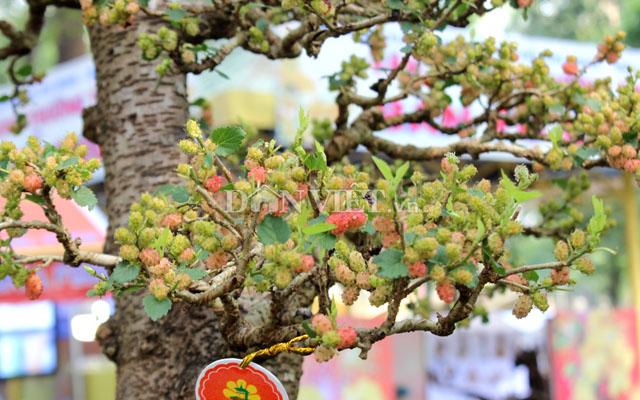 """Dàn """"người đẹp"""" bonsai dâu tằm trĩu quả khiến dân Sài thành mê mẩn - 8"""