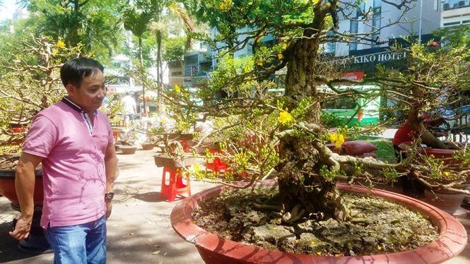 Hai cây mai trăm tuổi thế tuyệt đẹp giá gần 5 tỉ đồng ở Sài Gòn - 17
