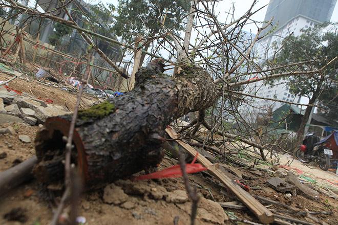 Bị ép giá chiều 30 Tết, phá hủy luôn cành đào rừng trước mặt khách - 7
