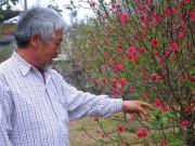 Thị trường - Tiêu dùng - Thảnh thơi chăm đào Tết, lão nông xứ Lạng thu hơn trăm triệu/vụ