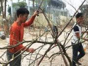 Tin tức trong ngày - Bị ép giá chiều 30 Tết, phá hủy luôn cành đào rừng trước mặt khách