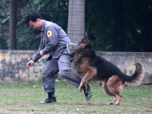 Chuyện cảm động về chú chó nghiệp vụ hy sinh khi bắt kẻ buôn ma túy