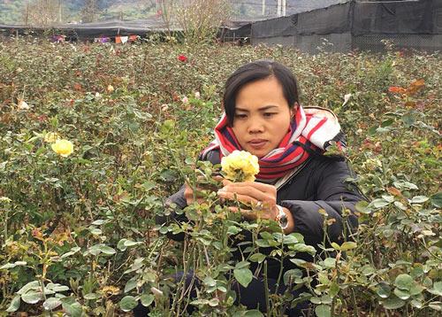 """Đầu năm, đến xông vườn của """"Nữ triệu phú"""" hoa hồng 8X ở Sơn La - 1"""