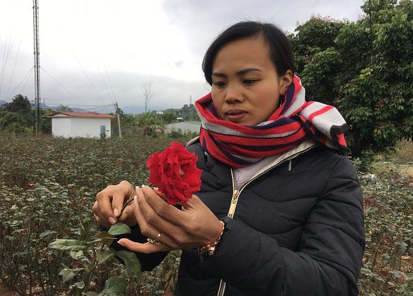 """Đầu năm, đến xông vườn của """"Nữ triệu phú"""" hoa hồng 8X ở Sơn La - 4"""
