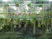 Thị trường - Tiêu dùng - Lạc vào vườn lan tiền tỷ đẹp như mộng ở phố núi