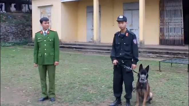 Xem cảnh sát chỉ huy chó nghiệp vụ luyện công trấn áp tội phạm