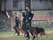 Tin tức trong ngày - Xem cảnh sát chỉ huy chó nghiệp vụ luyện công trấn áp tội phạm