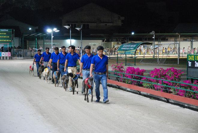 Đầu năm Mậu Tuất đi xem đua chó ở trường đua lớn nhất Đông Nam Á