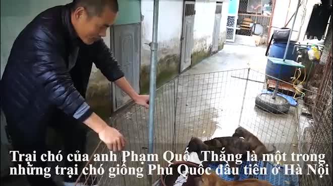 """Cận cảnh giống chó có """"lông mọc ngược"""" quý hiếm nhất Việt Nam"""
