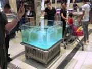 """Phi thường - kỳ quặc - Cá tự dưng """"bay"""" khỏi bể nước vào xe mua hàng của khách"""