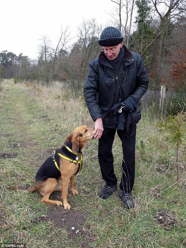 Anh: Chủ đưa 2 con chó đi dạo, bị cắn tới chết