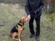 Thế giới - Anh: Chủ đưa 2 con chó đi dạo, bị cắn tới chết