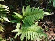 Tin tức sức khỏe - Phát hiện mới trong năm về loại cây mọc hoang giúp khỏe thận, giảm hẳn tiểu đêm sau 1 tháng