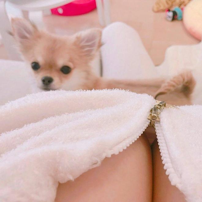 Dàn mỹ nhân mặc trễ nải đùa giỡn, massage cho cún cưng - 12