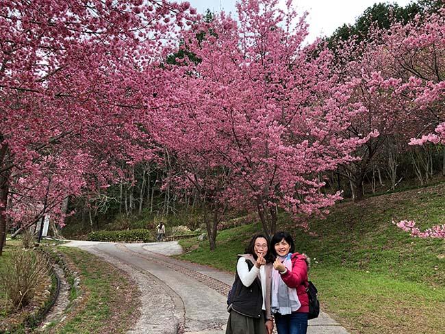 Rừng đào Đài Loan đẹp ngất ngây như lạc vào truyện tranh - 4