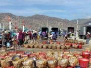 Thị trường - Tiêu dùng - Bội thu cá cơm đầu năm, mỗi chuyến đi biển ngư dân kiếm 30 triệu đồng