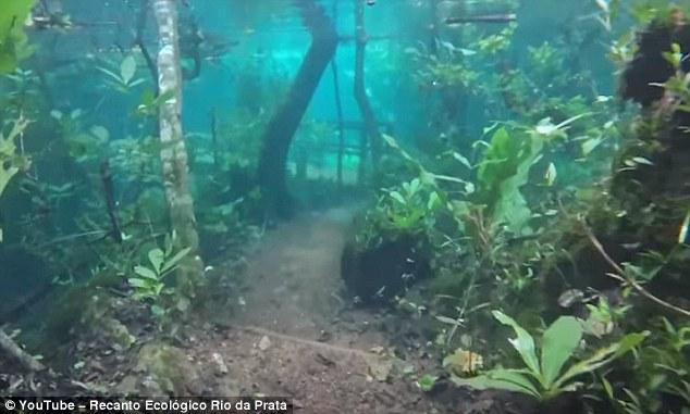 Cảnh chưa từng thấy khi cả khu rừng Brazil chìm sâu dưới nước - 2