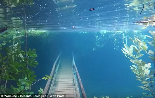 Cảnh chưa từng thấy khi cả khu rừng Brazil chìm sâu dưới nước