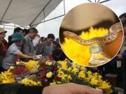"""Tin tức trong ngày - """"Rắn thần"""" tại Quảng Bình chỉ là... rắn nước"""