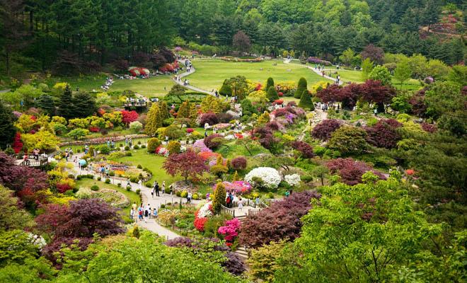 Bạn có biết Lễ hội Hoa Xuân tại Hàn Quốc? - 1