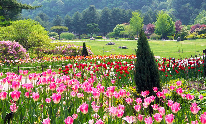 Bạn có biết Lễ hội Hoa Xuân tại Hàn Quốc? - 2