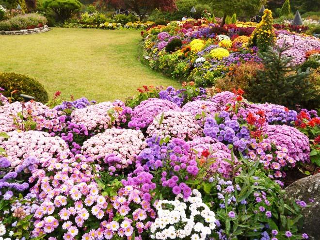 Bạn có biết Lễ hội Hoa Xuân tại Hàn Quốc? - 3