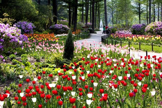 Bạn có biết Lễ hội Hoa Xuân tại Hàn Quốc? - 5