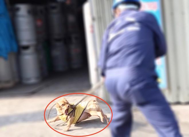 TP.HCM: Đầu năm 2018, đã có bao nhiêu chó thả rông bị bắt, tiêu hủy?