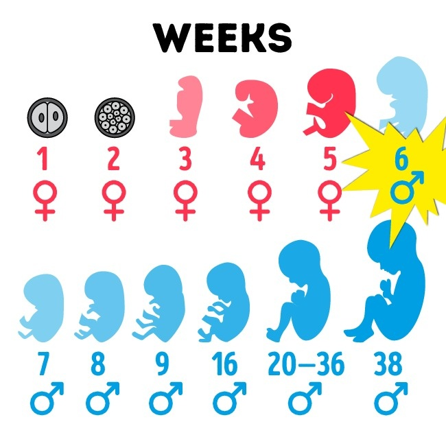 8 điều kỳ lạ chẳng mấy ai biết về cơ thể đàn ông - 5