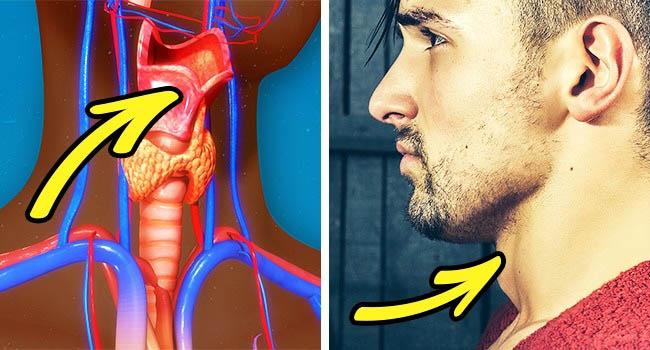 8 điều kỳ lạ chẳng mấy ai biết về cơ thể đàn ông - 7