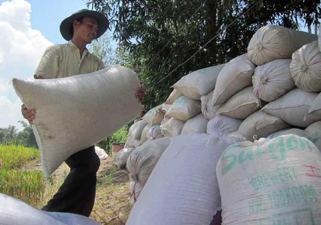 Giá gạo xuất khẩu tăng: Vừa mừng, vừa... lo - 1