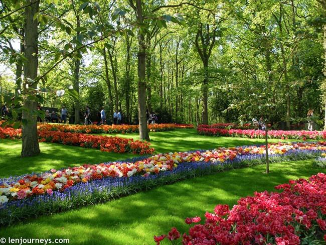 Mãn nhãn với loạt ảnh hoa xuân rực rỡ như lạc vào xứ thần tiên tại Hà Lan