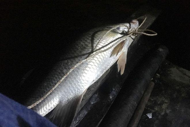 """Theo chân thợ săn cá """"khủng"""", từng 2 lần được lộc trời ban ở Sài Gòn - 14"""