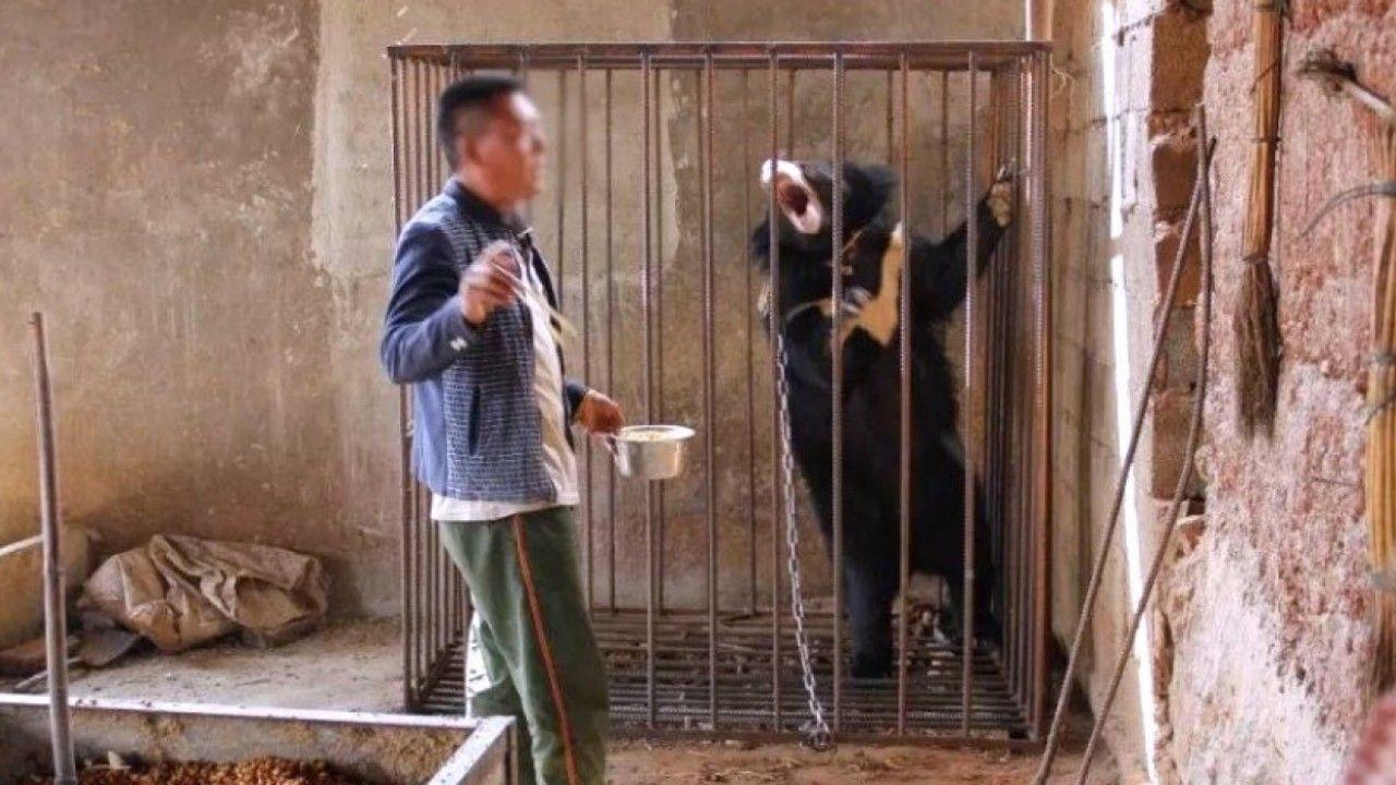 """TQ: Chó hoang được nhận nuôi bỗng """"hóa gấu"""" khổng lồ"""
