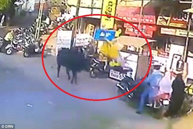 Ăn mặc khiến bò